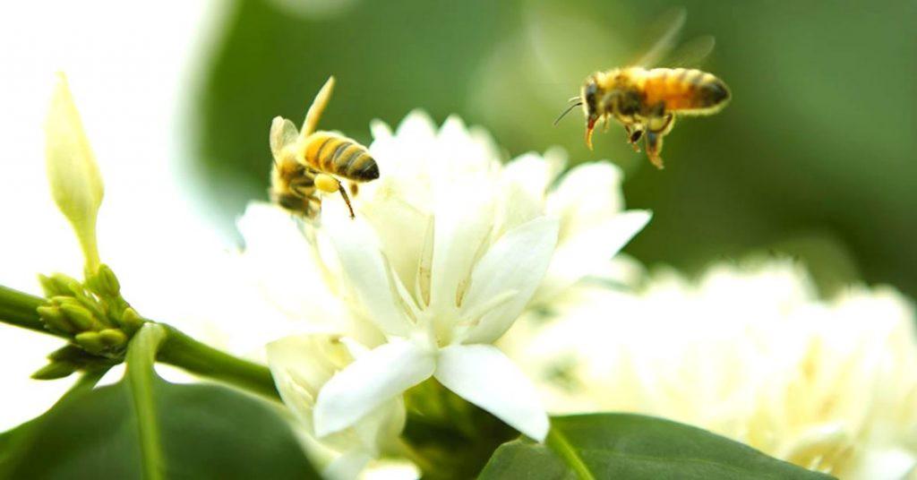 Mật ong hoa cà phê FUHINA nguyên chất - lọ 230ml