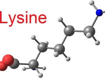 Lysine là gì? Vai trò của Lysine đối với trẻ nhỏ như thế nào?