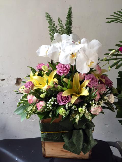 "Giỏ hoa lan ""Thanh Cao"" trong sáng"