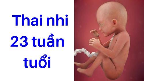 thai nhi 23 tuần tuổi đạp như thế nào