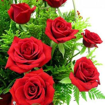 12 Medium Stem Roses