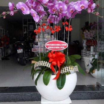 Chậu Lan Hồ Điệp Hồng Sang Trọng