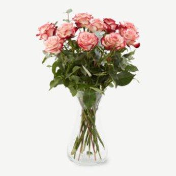 Pink roses Denmark