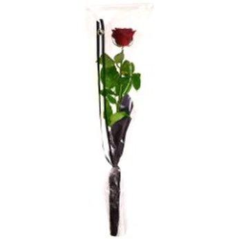 Rose in cellophane Denmark