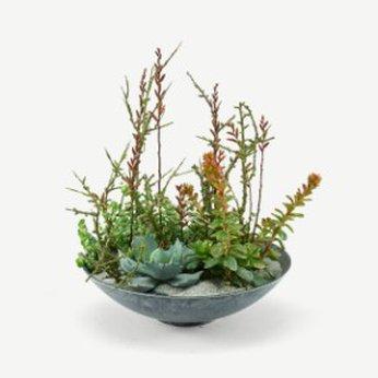 Succulent arrangement Denmark