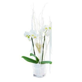White Orchid Germany