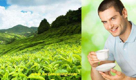 Uống trà nõn tôm để khỏe và đẹp hơn