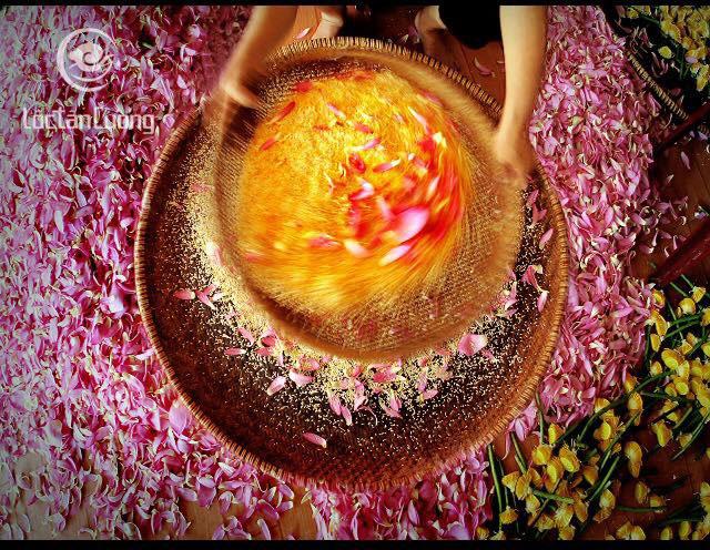 Quy trình ướp trà chính là một trong những điểm đặc biệt của trà sen