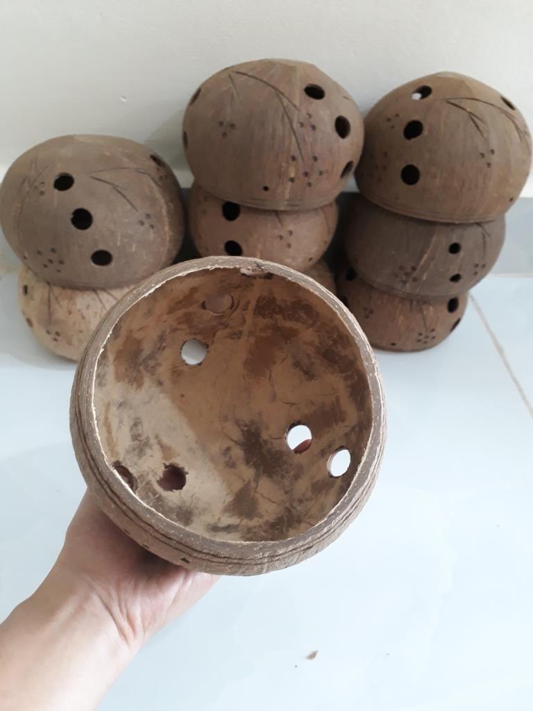 Gáo dừa trồng lan - Mỹ Nghệ Nam Trang