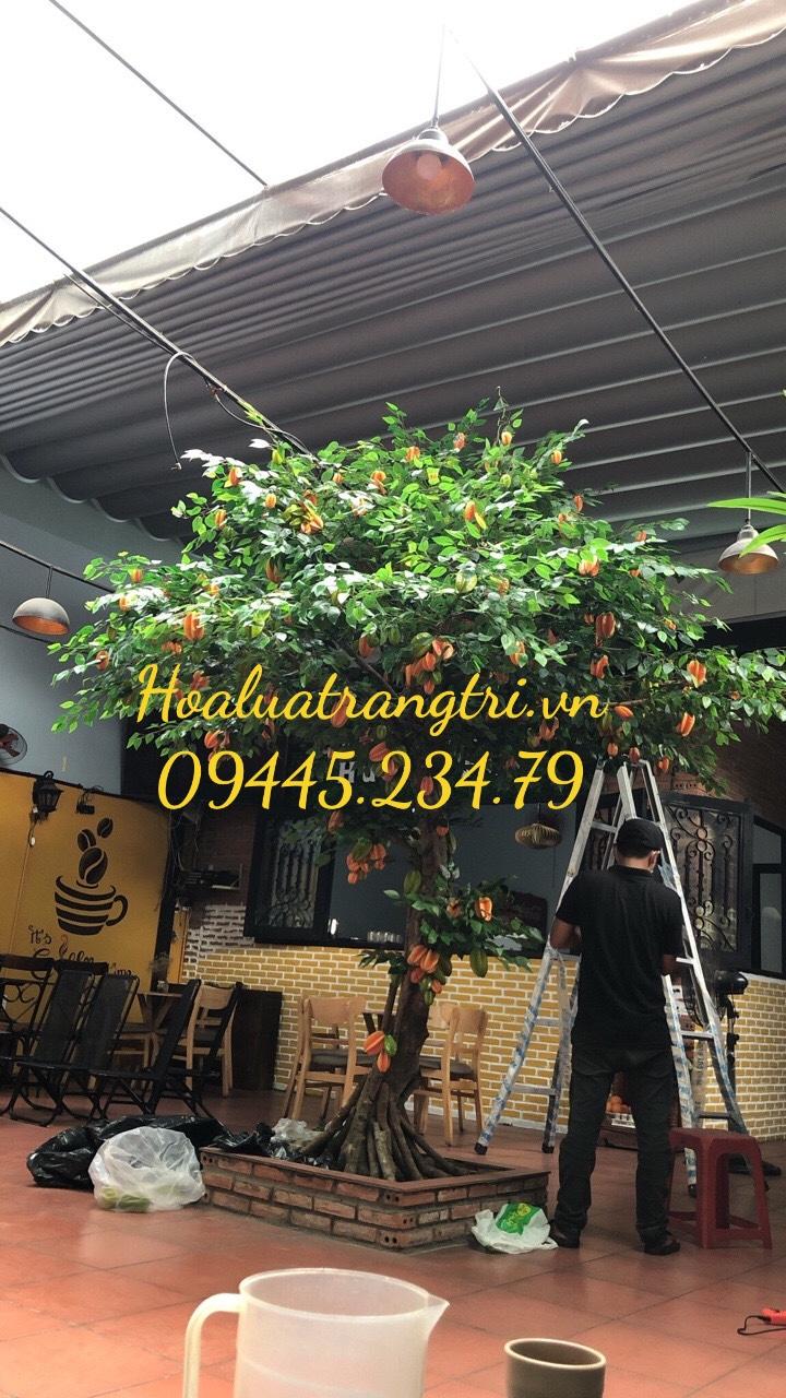 Cây Khế Tài Lộc/Nhã Đan Shop