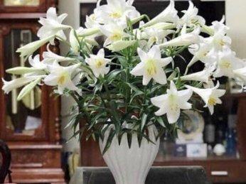 Loa kèn, loài hoa gọi hè
