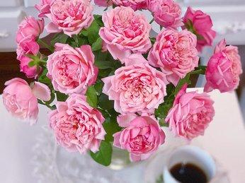 Mẹo cắm hoa hồng tươi lâu