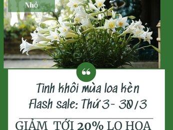 Flash Sale giảm giá tới 20% tại Gia Đình Nhỏ tất cả các bình hoa cắm hoa loa kèn