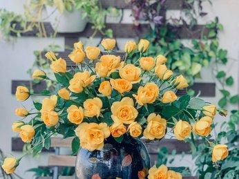 Hoa hồng vàng leo mới vào mùa, hãy thử cắm một bình với những mẹo sau