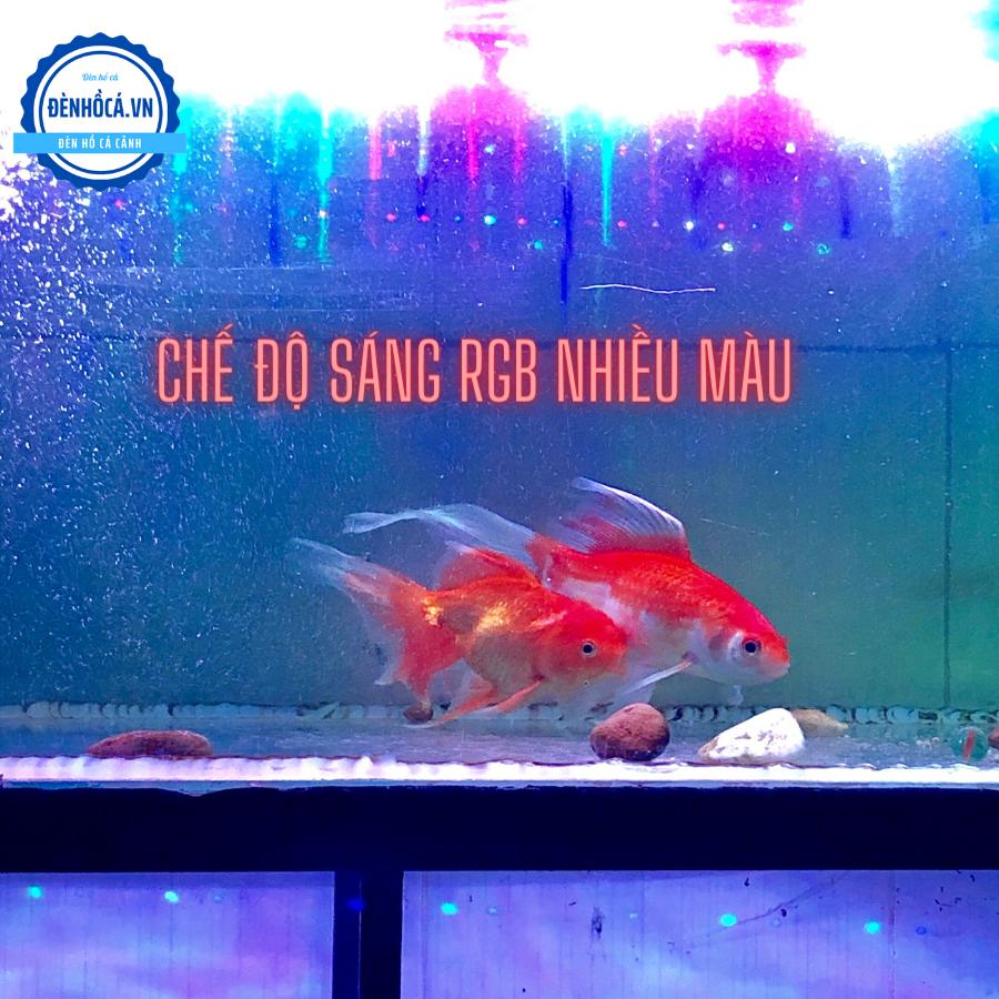 Đèn TANNING - SOI CÁ 52 cm cho cá Huyết Long, các loài cá màu ĐỎ, HỒNG, CAM
