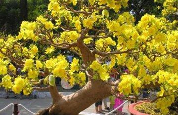 Những loại cây phong thủy mang ý nghĩa tốt lành nên trồng cuối năm