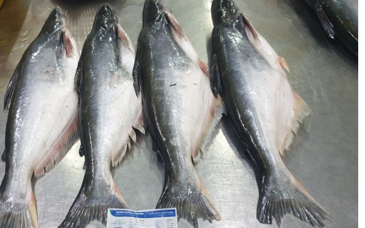 Frozen Pangasius Gutted Whole Round