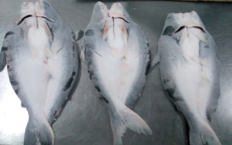 Frozen Pangasius Butterfly , Head On