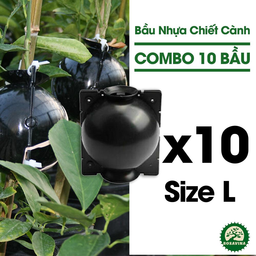 Combo 10 Bầu Chiết Cành - Size: L