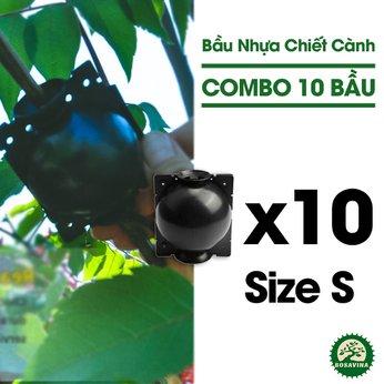 Combo 10 Bầu Chiết Cành - Size: S