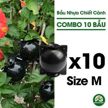 Combo 10 Bầu Chiết Cành - Size: M