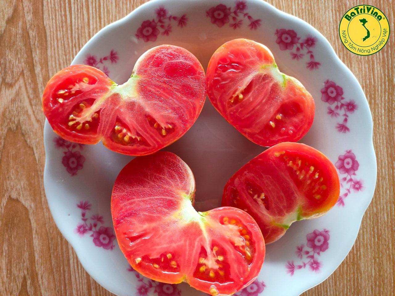 Cà chua Beef Flavor Socola - Combo 10 hạt giống