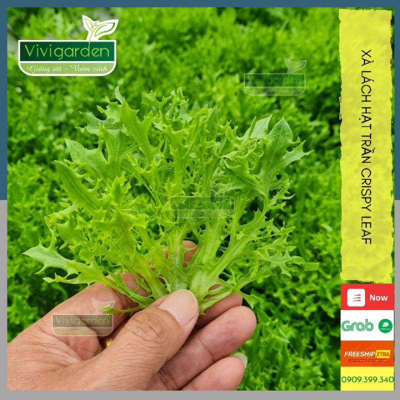 Xà lách giòn ngọt Crispy Leaf - Hũ 0.5gr (400 -500 hạt trần)