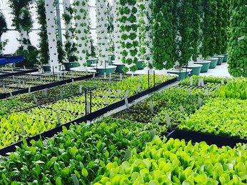 Bí quyết bỏ túi cho người mới tập trồng rau sạch thủy canh lần đầu