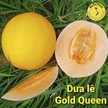 Dưa lê Gold Queen chuẩn Mỹ - Combo 10 hạt