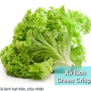 XÀ LÁCH GREEN CRISPY