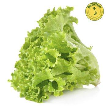 Xà lách lá sồi Green Leaf - Combo 100 hạt bọc men