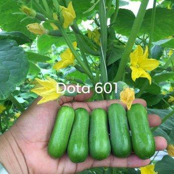 DƯA LEO BABY DOTA 601