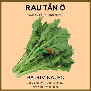 Hạt giống rau tần ô - cải cúc Trang Nông nảy mầm tốt