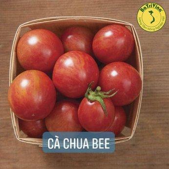 Cà chua Cherry Bee - Combo 5 hạt