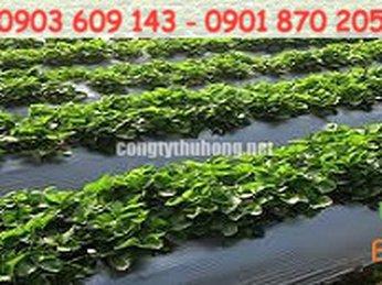 Màng phủ nông nghiệp bảo vệ cây trồng