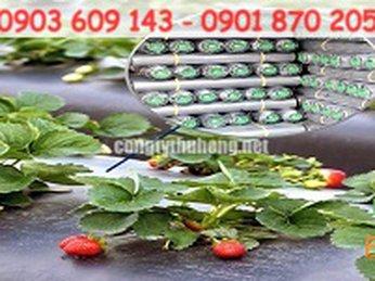 Cuộn màng phủ trồng các loại cây ăn quả