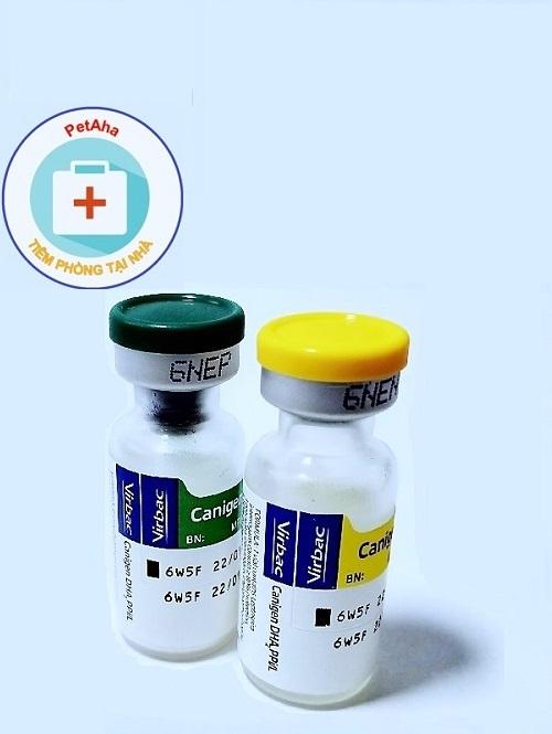 Vaccine Canigen 6 bệnh cho chó