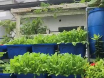 [VIDEO] HỆ THỐNG AQUAPONCS 10 KHAY