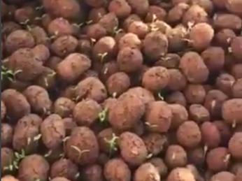 [VIDEO] HỆ THỐNG AQUAPONICS - CTY Khang Mẫn