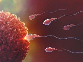 Thụ tinh ống nghiệm khác gì thụ tinh nhân tạo?