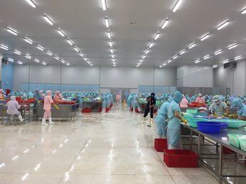 PANGASIUS EXPORTS TO GERMANY ROSE