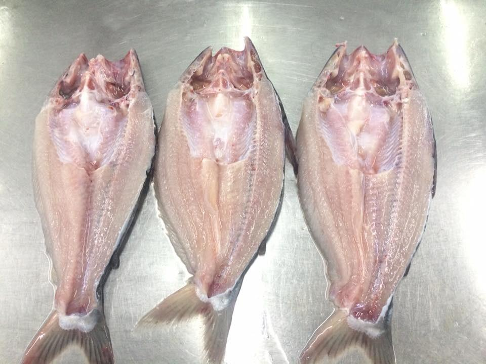 pangasius butterfly head on8.jpg (83 KB)