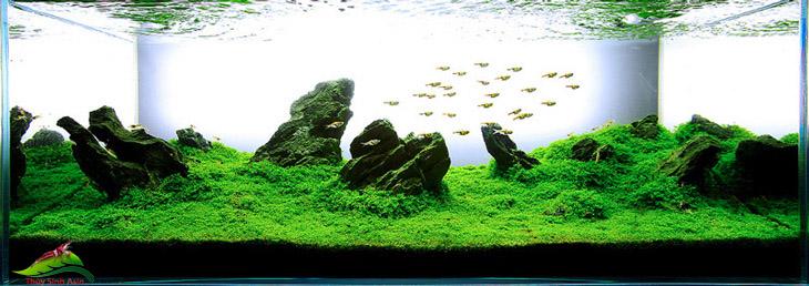 6 lợi ích cây thủy sinh mang lại cho cá