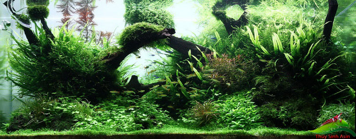 Cây thủy sinh tạo môi trường tự nhiên