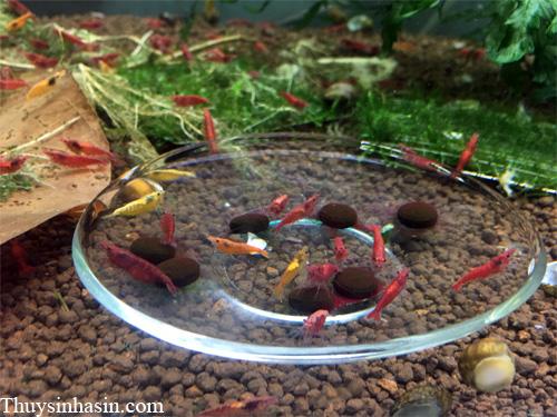 Tảo Viên Nhật Spirulina - thức ăn cho tép