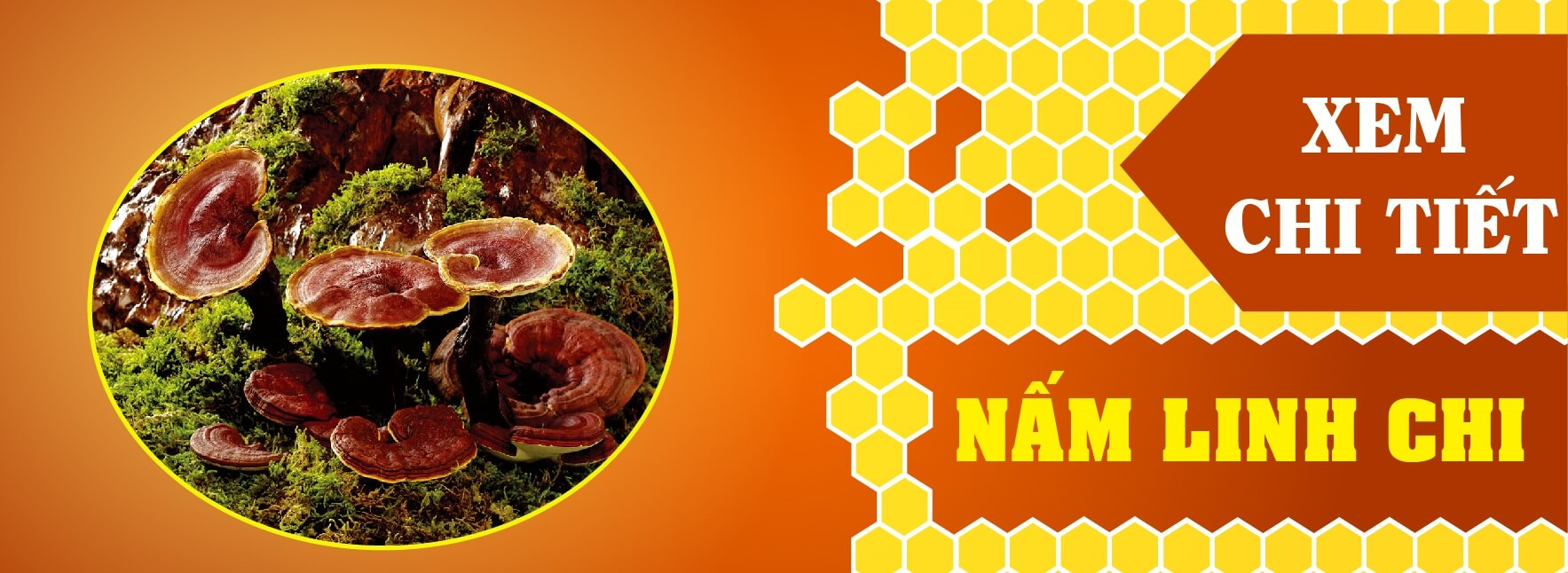 nấm linh chi rừng tự nhiên