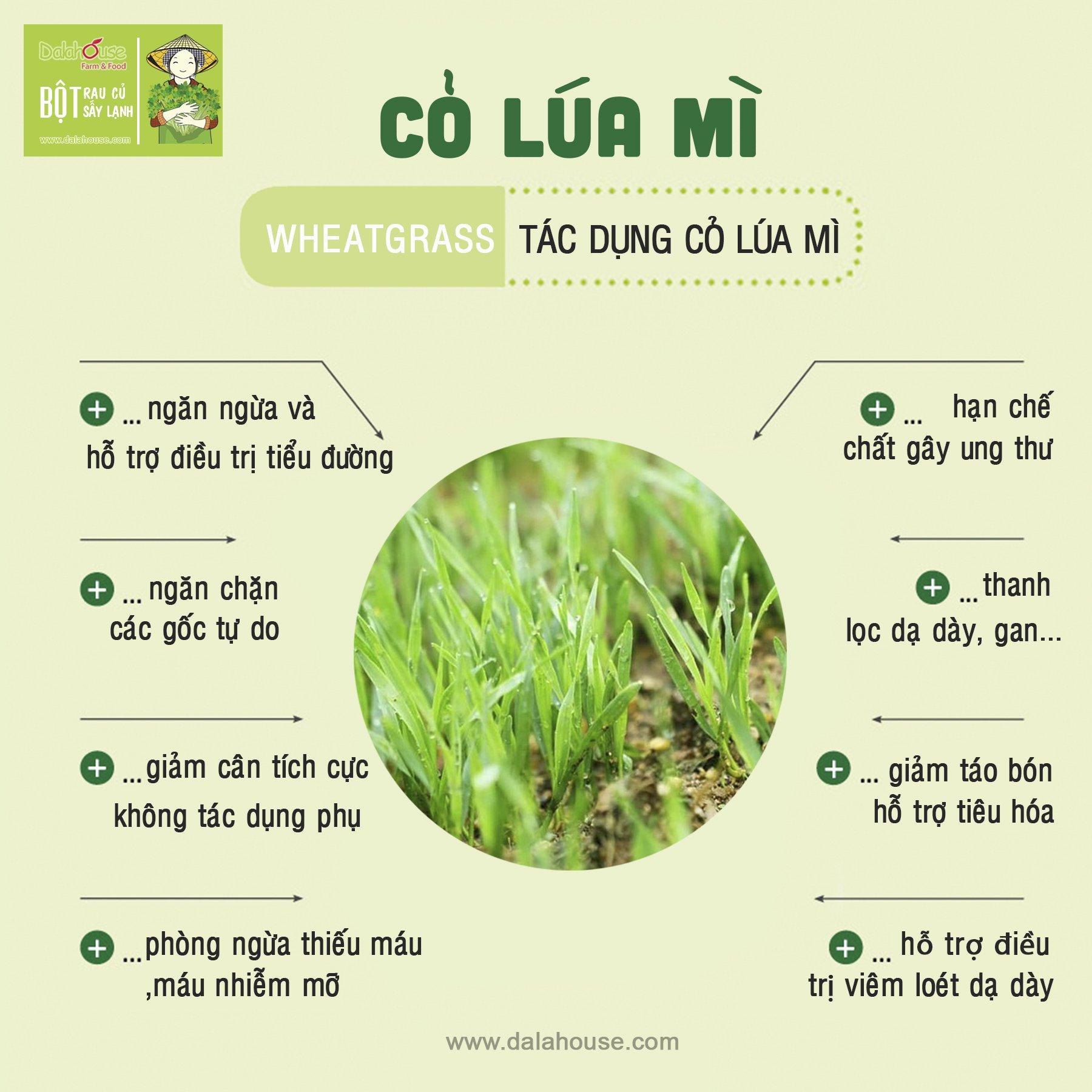 tác dụng bột cỏ lúa mì