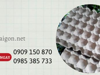Phân phối khay giấy đựng trứng giá rẻ