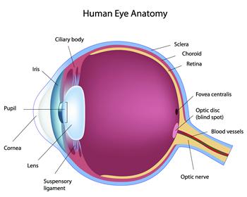 Thuốc bổ mắt Vitamin for eyes của UK Visionace Original