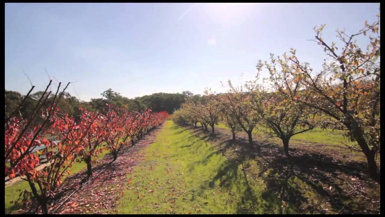 Melbourne - Dandenong - Yarra Valley - Sydney - Wollongong - Jervis Bay